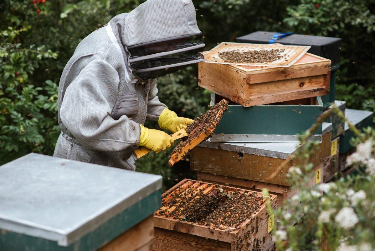 apiculteur-miel-blanc-kirghizistan